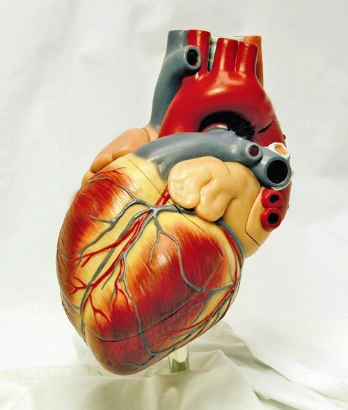 طرح - قلب