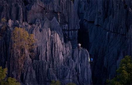 جنگل صخرهای جزیره ماداگاسکار