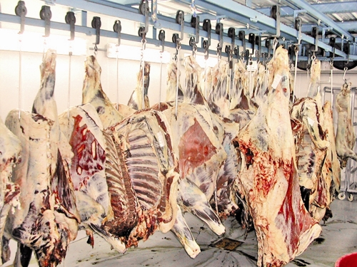 بازار مواد پروتئینی در شیب افزایش قیمت