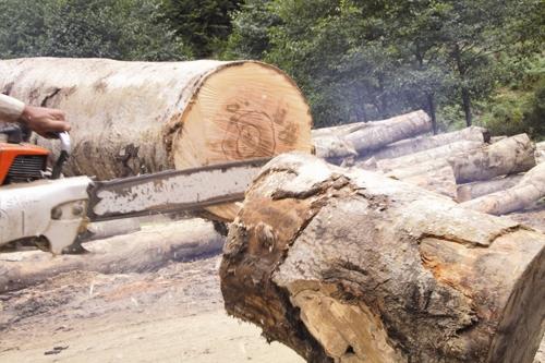 بررسی ریشههای تخریب در جنگلهای شمال