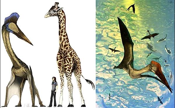 فسیل دایناسورهای بالدار