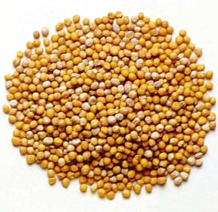 دانههای خردل