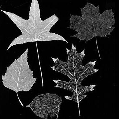 برگ گیاهان