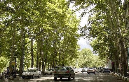 درختان خیابان ولی عصر