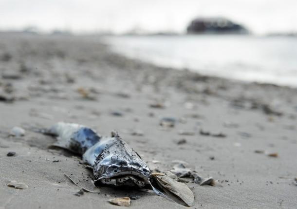 گزارش فاکس نیوز از آلودگیهای تازه نفتی در سواحل آمریکا