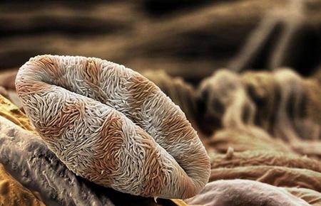 گرده افشانی میکروسکوپی