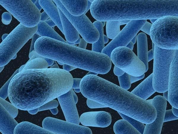 شمارمبتلایان به تب کریمه-کنگو در کشور به 82 نفر رسید
