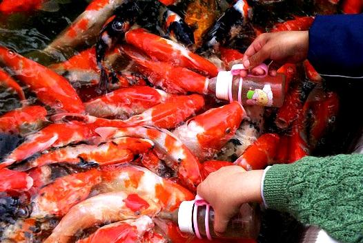 ماهیهای شیرخوار