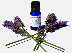 lavender flowers2