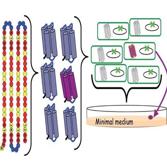 اولین پروتئینهای مصنوعی در محیط آزمایشگاه ساخته شد