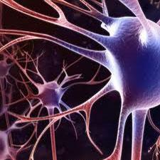 نورونهای عصبی