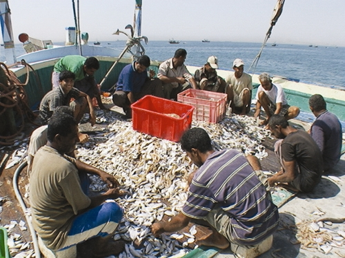 خداحافظی غذاهای دریایی از سفره جنوبیها