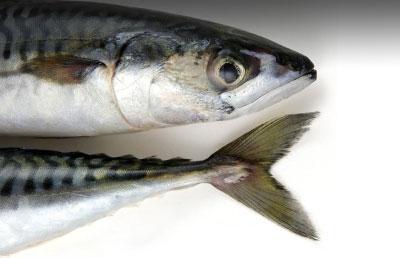 ماهی چرب