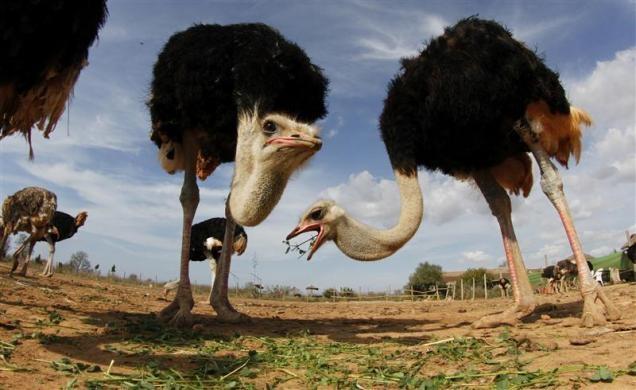 حیواناتی از گوشه و کنار دنیا در قاب تصاویر