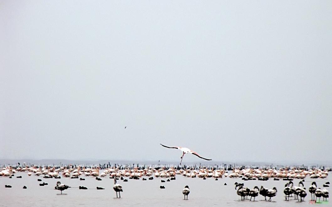 میانکاله - دریای خزر
