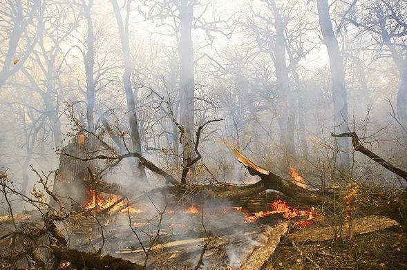 آتش سوزی  - جنگل