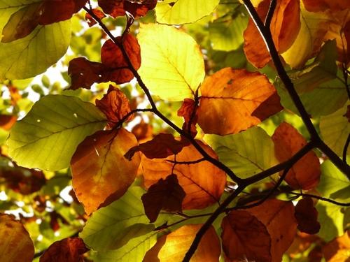 استفاده از برگهای پاییزی در دکوراسیون