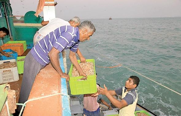 آغاز فصل صید ماهی و میگو در جزیره قشم