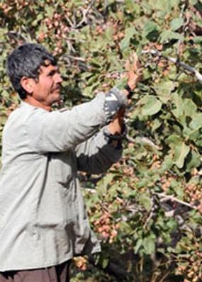 کارگران بخش کشاورزی دیگر رغبتی به تولید ندارند
