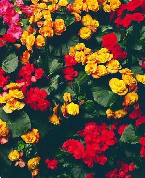 چگونه باغچهای از گیاهان در آپارتمان داشته باشیم؟