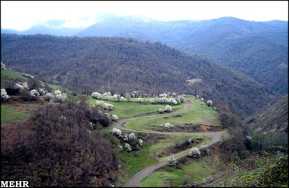 آشنایی با جنگل فندقلو - اردبیل