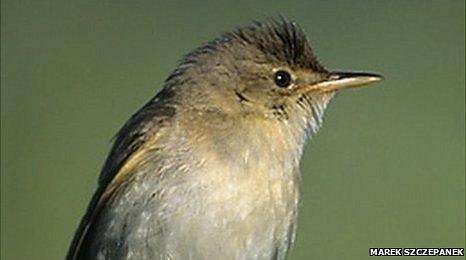 پرندههای چرنوبیل