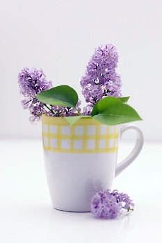 گلدان حاوی مقداری جوششیرین