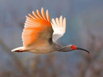 پرندگان کمیاب
