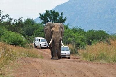 هرگز از یک فیل سبقت نگیرید