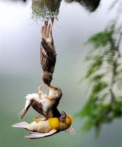 نجات جوجه پرنده