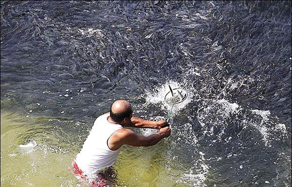 تصاویر هجوم هزاران ماهی به سواحل مکزیک