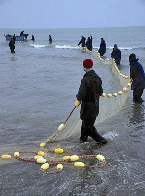ناخوشی همزمان ماهی و ماهیگیر
