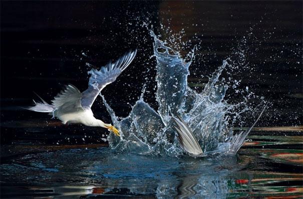 لحظه لحظه با پرندگان