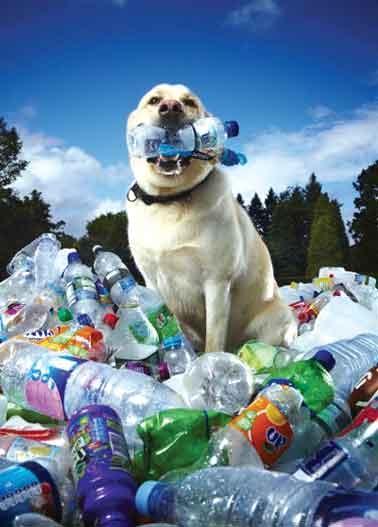 رکوردهای بازیافت در کتاب گینس