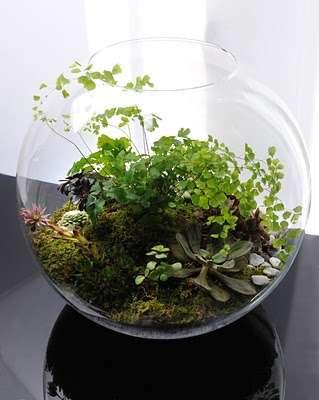آشنایی با طراحی گیاهان آپارتمانی