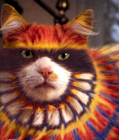 نقاشی؛ رنگآمیزی یا آزار گربهها؟