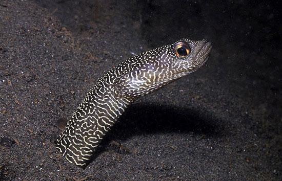 گونههای جدید ماهیها در دنیای زیر آب اندونزی