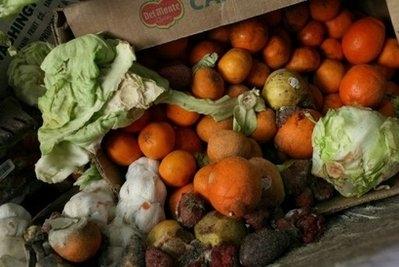 سالانه بیش از یک  میلیارد تن غذا تلف میشود