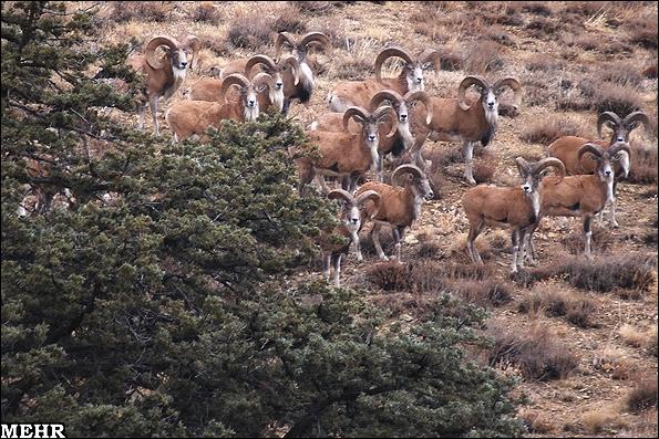 آشنایی با پارک ملی گلستان