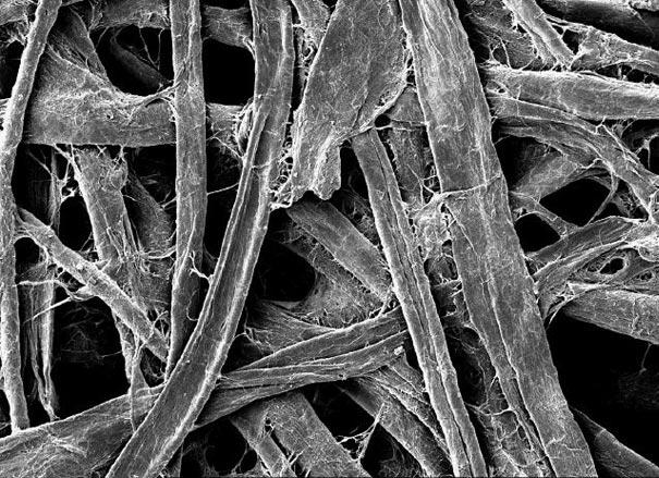 از نگاه میکروسکوپ