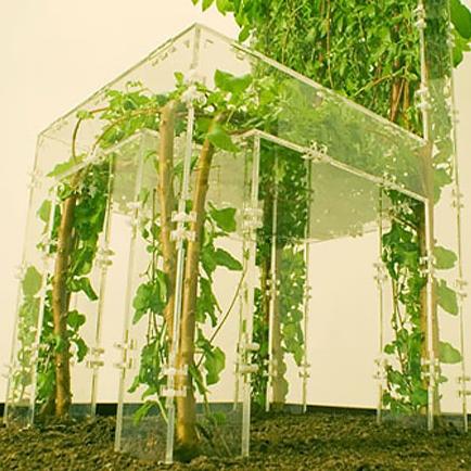 گیاهان ارگانیک