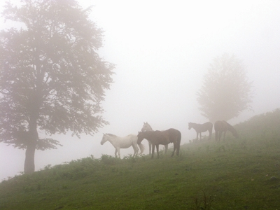 طبیعت - اسب