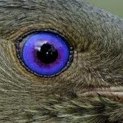 پرنده آلاچیق ساز