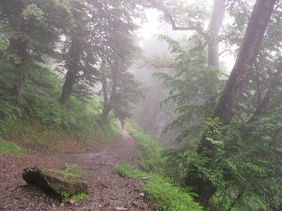 طبیعت - جنگل