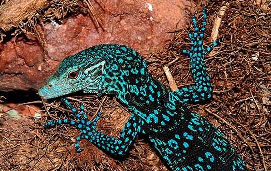 کشف گونههای جدید جانوری در گینه نو