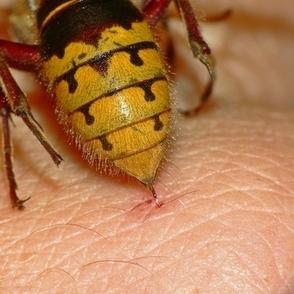 bee-stings