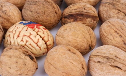 غذاهای مفید برای مغز