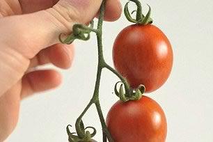 تولید ابر گوجهفرنگی