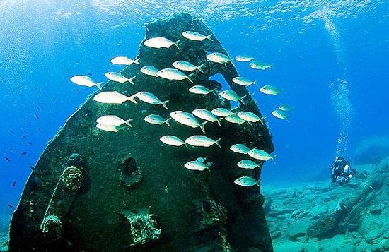 دنیای زیر آبهای اژه