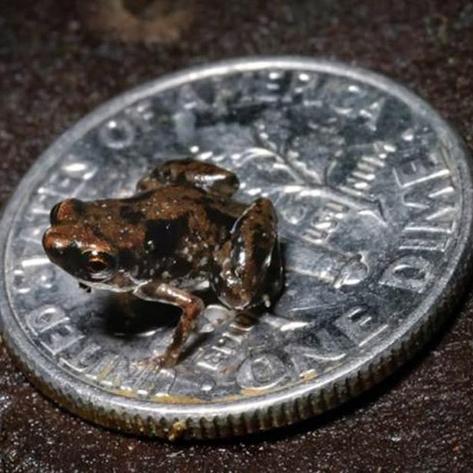 کوچکترین مهرهدار جهان